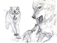 2 Wolves Drawing 180 Best Wolf Drawings Images Drawing Techniques Drawing