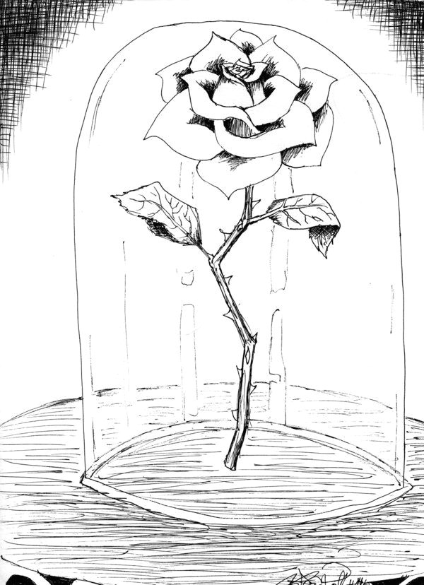 Cute Drawing Of A Rose Beauty and the Beast Drawings Beauty and the Beast Rose by