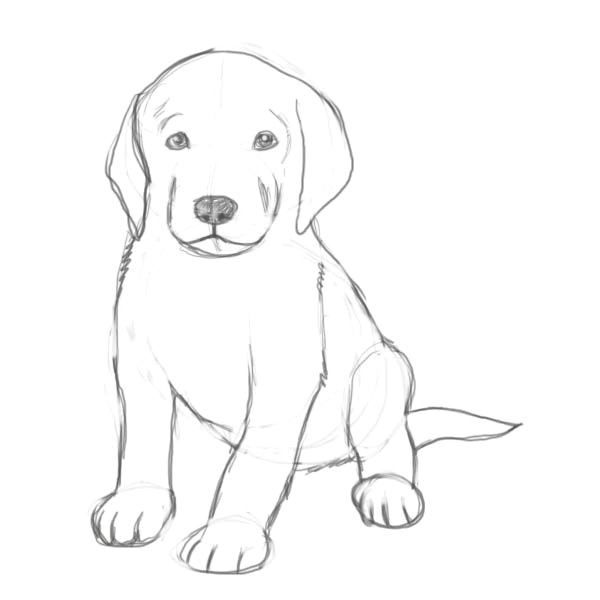 Dog Drawing Guide How to Draw A Puppy Drawing Drawings Puppy Drawing Sketches