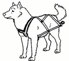 Dogs Drawing Sleds 19 Best Dog Sledding Images Sled Dogs Animales Dogs
