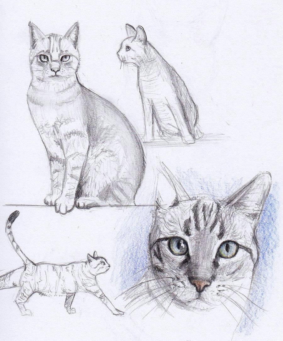 Drawing A Cat with Pencil Cat Drawing Cats and Owls Cat Drawing Drawings Cat Sketch