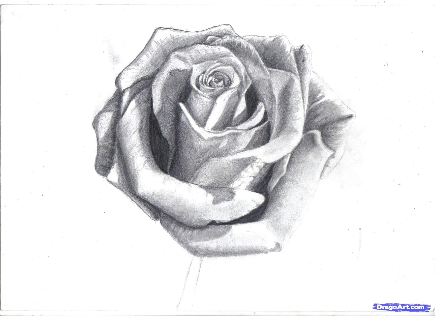 Drawing A Realistic Rose Step by Step How to Draw A Rose In Pencil Draw A Realistic Rose Step by Step