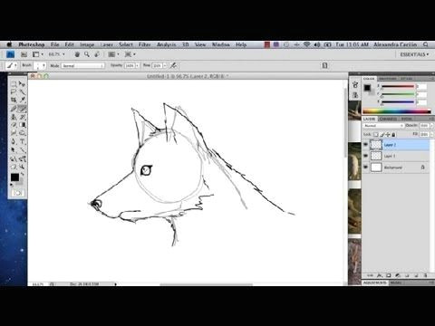Drawing A Wolf Youtube How to Draw A Wolf In Photoshop Photoshop Tutorials Youtube