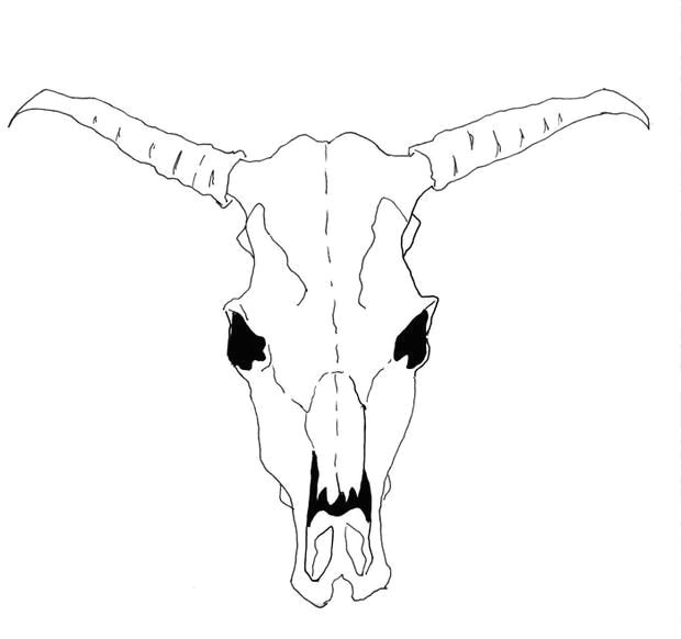 Drawing Cow Skulls How to Draw A Cow Skull for Georgia O Keeffe Famous Artist