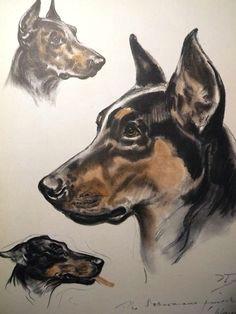 Drawing Dogs Diana Thorne 43 Best Dog Art Images Dog Portraits Vintage Dog Dog Breeds