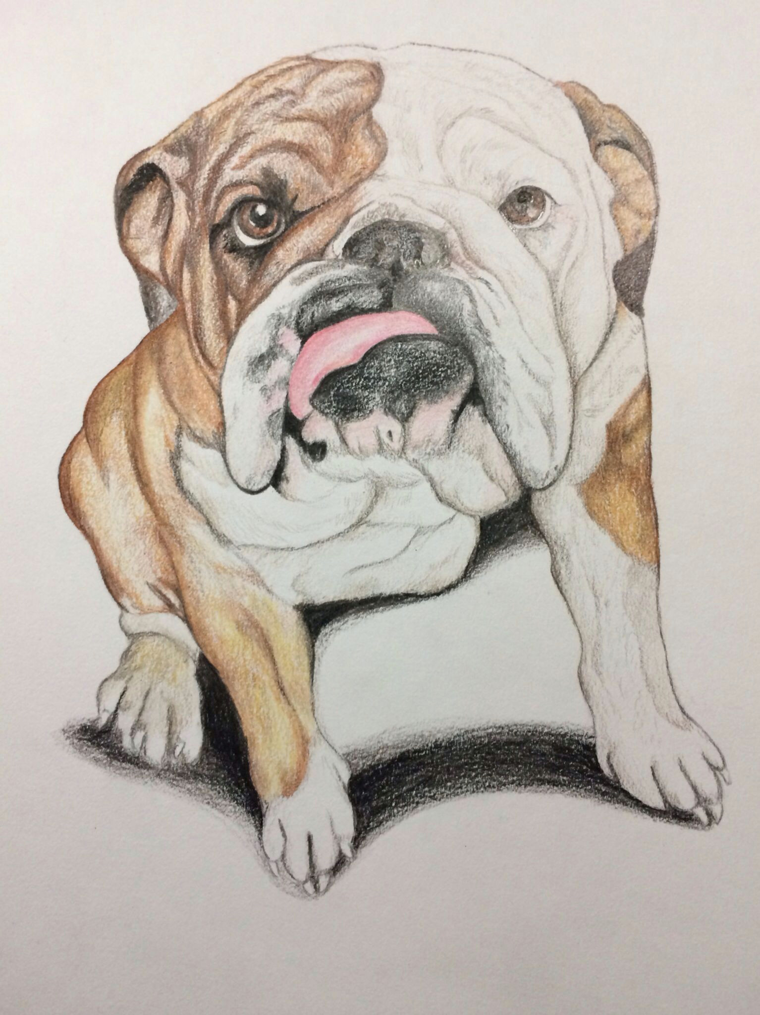 Drawing Dogs In Love This is A Bulldog Portrait I Drew I Love Drawing and Bulldogs are