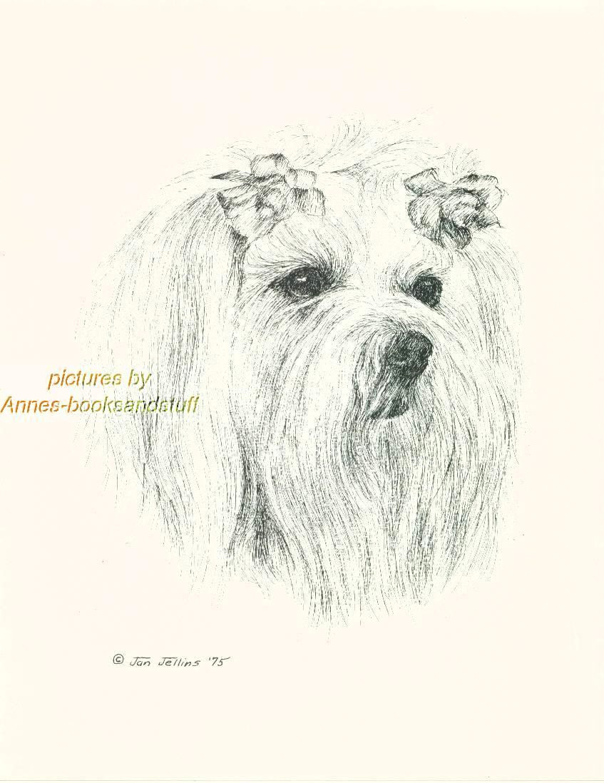 Drawing Dogs In Pen and Ink 44 Maltese Dog Art Print Pen and Ink Drawing Jan Jellins Ebay
