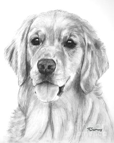 Drawing Dogs In Pencil 90 Best Pencil Drawings Puppies Images Dog Art Drawings Of Dogs