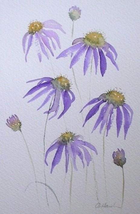 Drawing Flowers with Watercolor Pencils Pin by Carol Cahill On Watercolor Artwork Acuarela Pintura