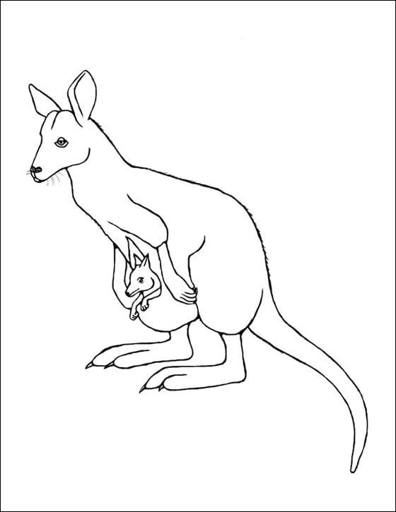 Drawing Ideas Kangaroo Wallaby Google Search Line Drawings for Literacy Kangaroo