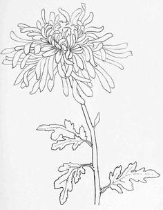 Drawing Multiple Flowers 1150 Best Doodle and Draw Images In 2019 Drawing Techniques