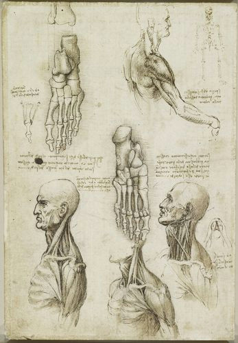 Drawing Neck Muscles Recto the Throat and the Muscles Of the Leg Verso the Bones Of