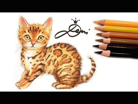 Drawing Of A Bengal Cat Bengal Katze Zeichnen Lernen Mit Buntstiften How to Draw A Bengal