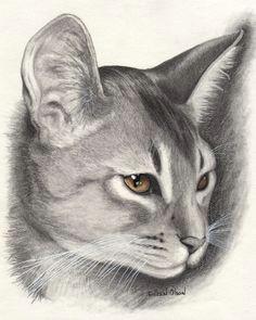 Drawing Of A Cat Walking 2291 Best Cat Drawings Images Cat Art Drawings Cat Illustrations
