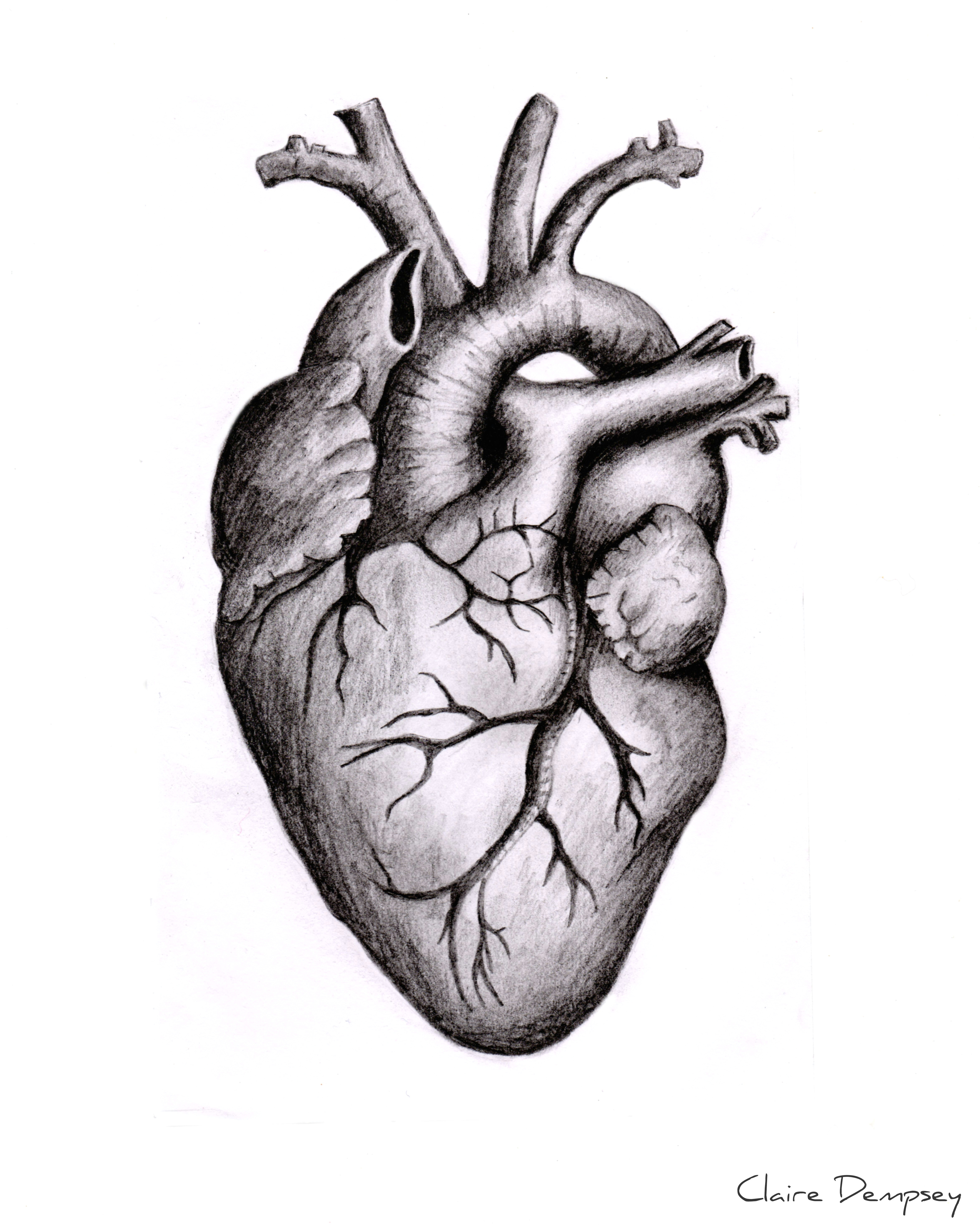 Drawing Of A Heart attack Anatomically Correct Human Heart by Niku Arbabi Embroidery