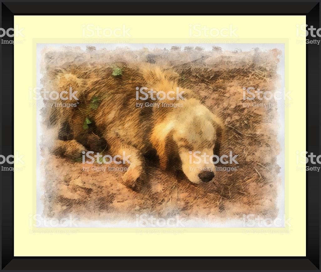Drawing Of A Sleeping Dog original Watercolor Painting Of Sleeping Dog Stock Photo More