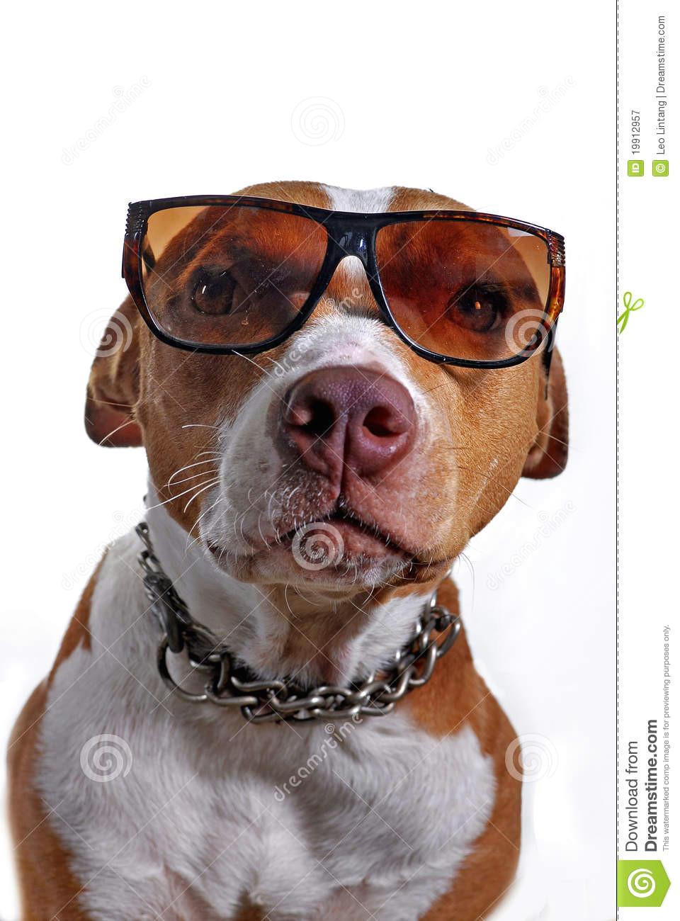 Drawing Of Dog Wearing Sunglasses Pitbull Dog Wearing Glasses Stock Image Image Of Portrait Head