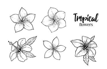 Drawing Of Exotic Flowers Image Result for Tropical Flowers Drawing Art Drawings Flower