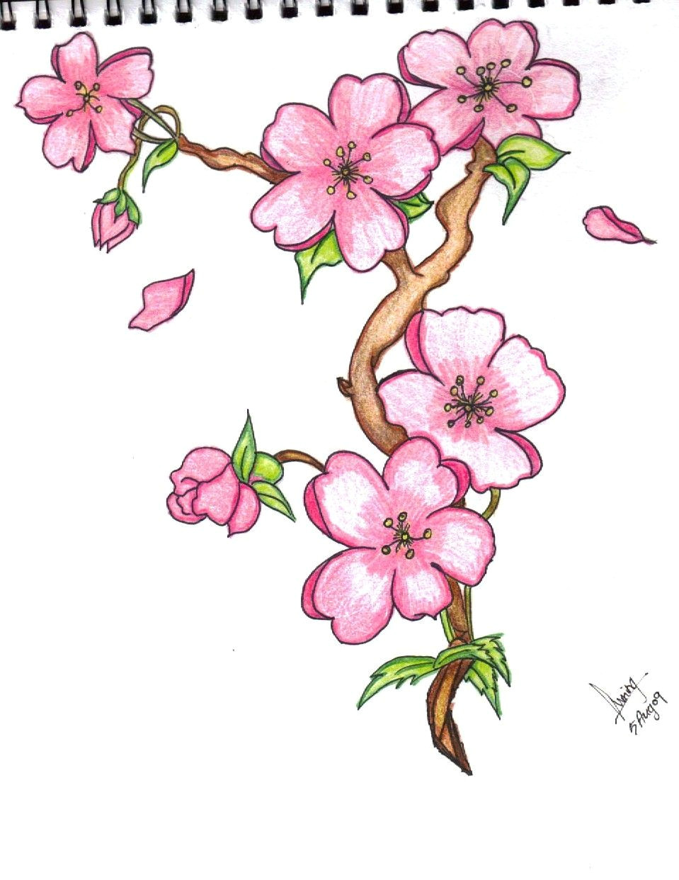 Drawing Of Flower Jasmine Pin by Marvin todd On Drawing Flowers In 2019 Pinterest Drawings