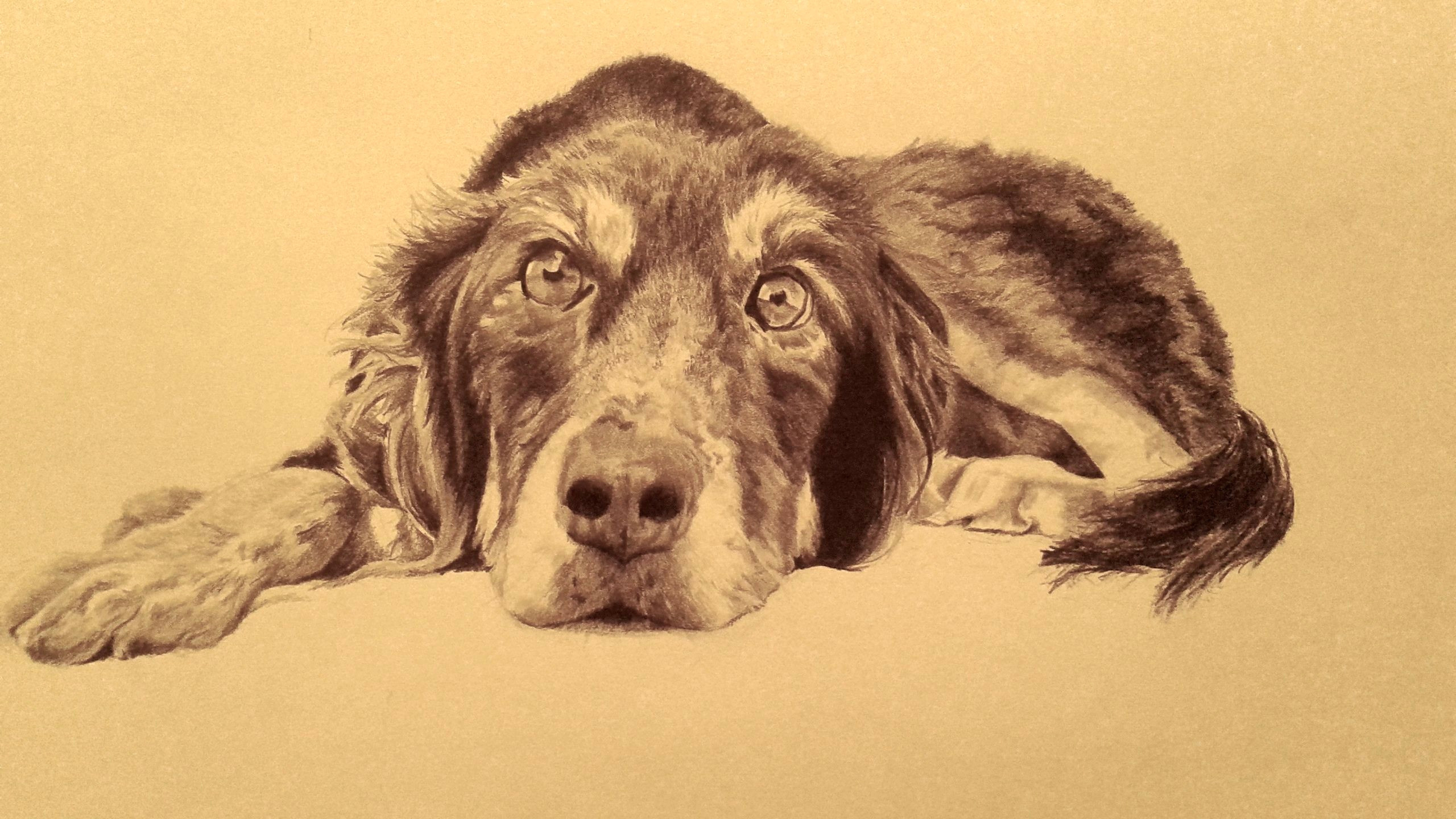 Drawing Of My Dog Drawing Of My Friend S Dog Graphite Art Pencil Drawings My Art