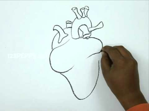 Drawing Of Two Hands Making A Heart How to Draw A Human Heart Youtube