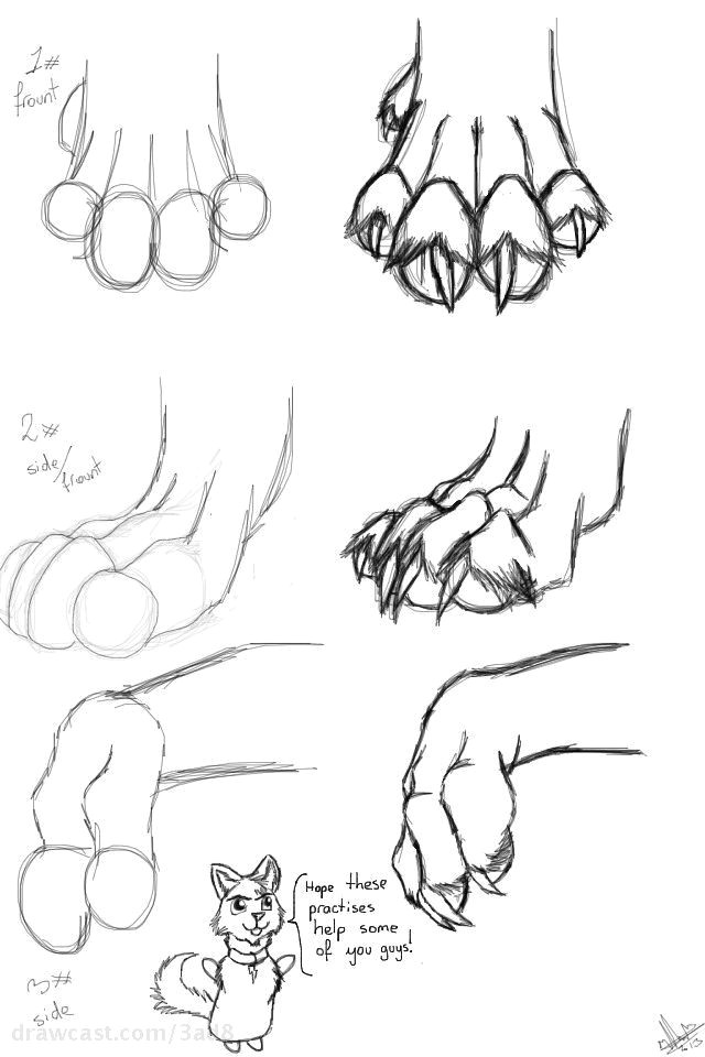 Drawing Wolf Nose How to Draw Wolf Paws Drawing Tutorials Drawi