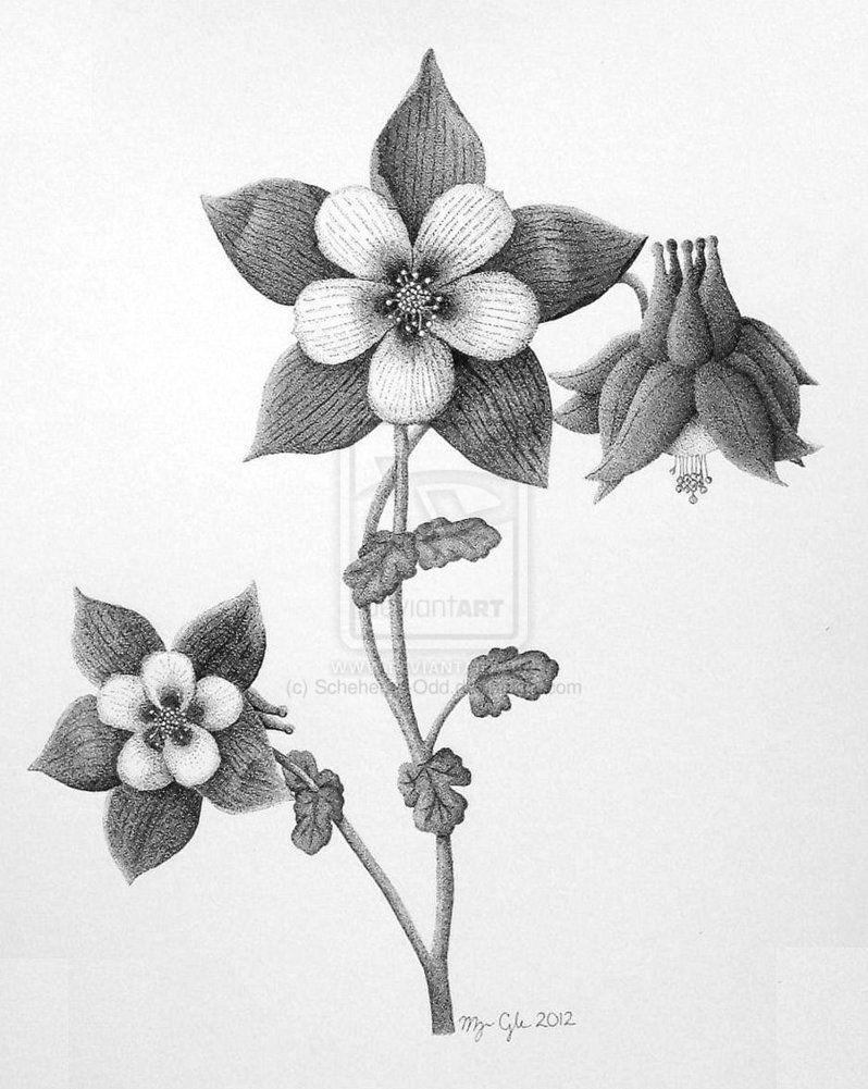 Drawings Of Columbine Flowers Columbine Flower Columbine Flower by Scheheraz Odd On Deviantart