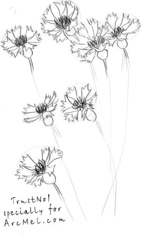 Drawings Of Corn Flower How to Draw A Cornflower Step 3 Art Design Pinterest
