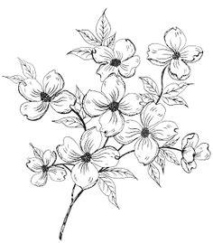 Drawings Of Dogwood Flowers 18 Best Dogwood Images Dogwood Flowers Dogwood Flower Tattoos
