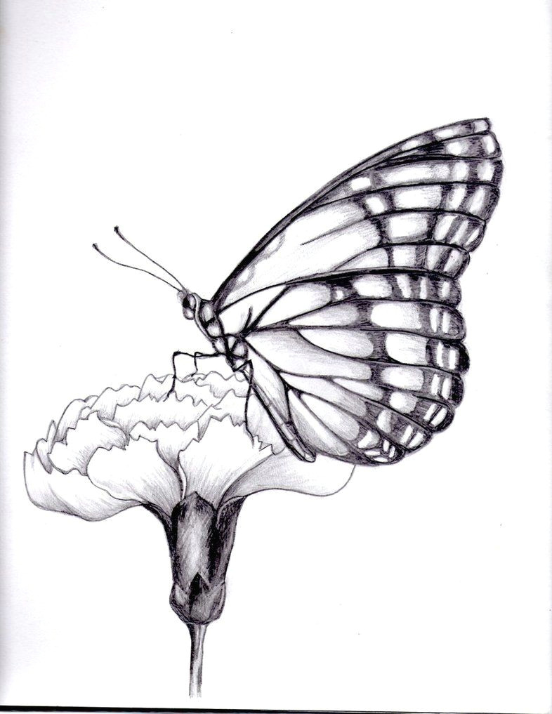Drawings Of Flower and butterfly Drawings Of Flowers and butterflies My Drawing Of A butterfly by