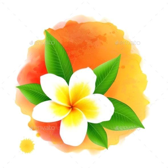 Drawings Of Frangipani Flowers Vector Frangipani Flower On orange Watercolor Business Logo S In