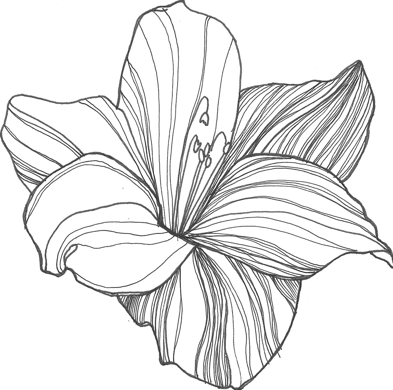 Drawings Of Lily Flowers Nicole Illustration Flower Power Patterns Drawings Flowers