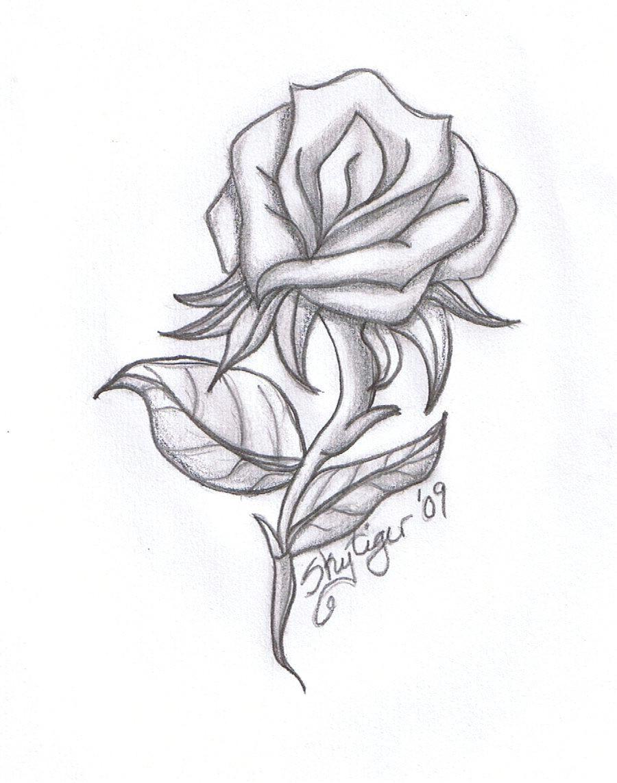 Drawings Of Roses In Pencil Step by Step Drawing Beautiful Roses Rose Drawings Rose Symbol Of Love Rose