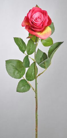 Drawings Of Roses with Stems 34 Best Rose Stems Images Drift Wood Rose Stem Stems