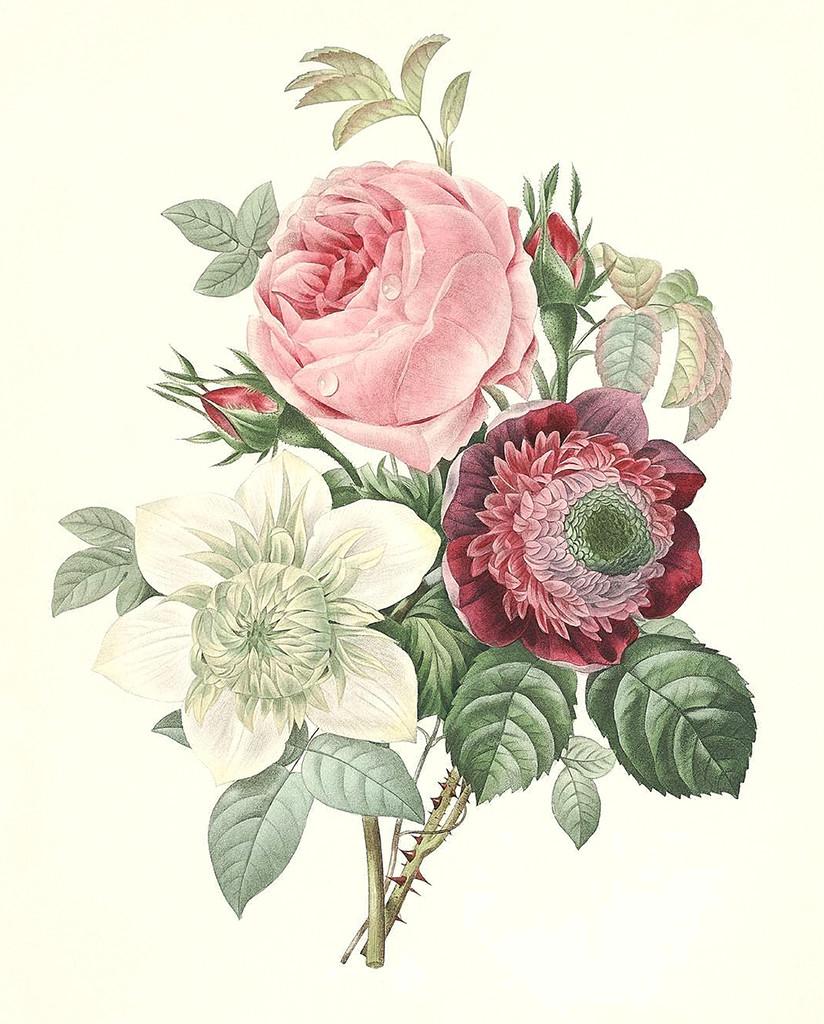 Drawings Of Vintage Flowers Rose Anemone Clematide Art Vintage Botanical Prints Botanical