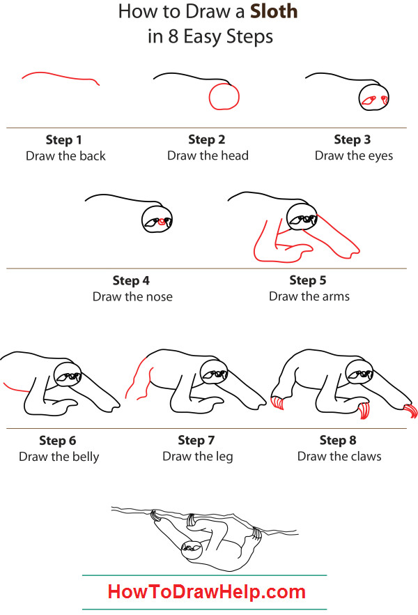 Easy 5 Step Drawings How to Draw A Sloth Step by Step Belt is Our Favourite Character