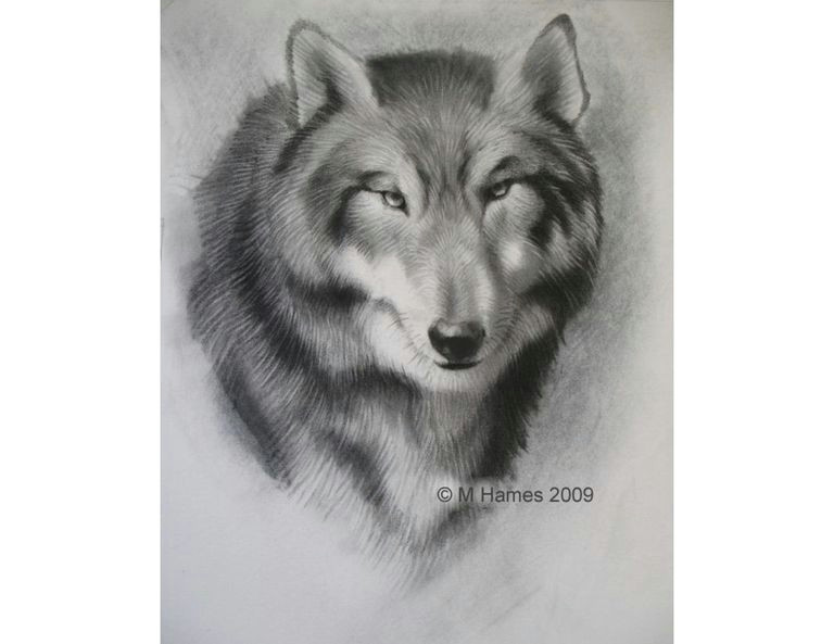 Easy Drawing Of A Wolf Face A Step by Step Guide Of How to Draw A Wolf
