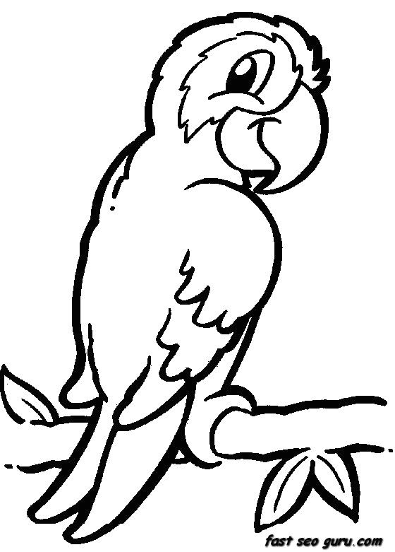 Easy Jungle Drawings Jungle Safari Coloring Pages Homepage A Animal A Printable Jungle