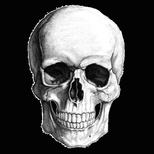Skull Drawing Background White Skull Drawing Transparent Png Stickpng