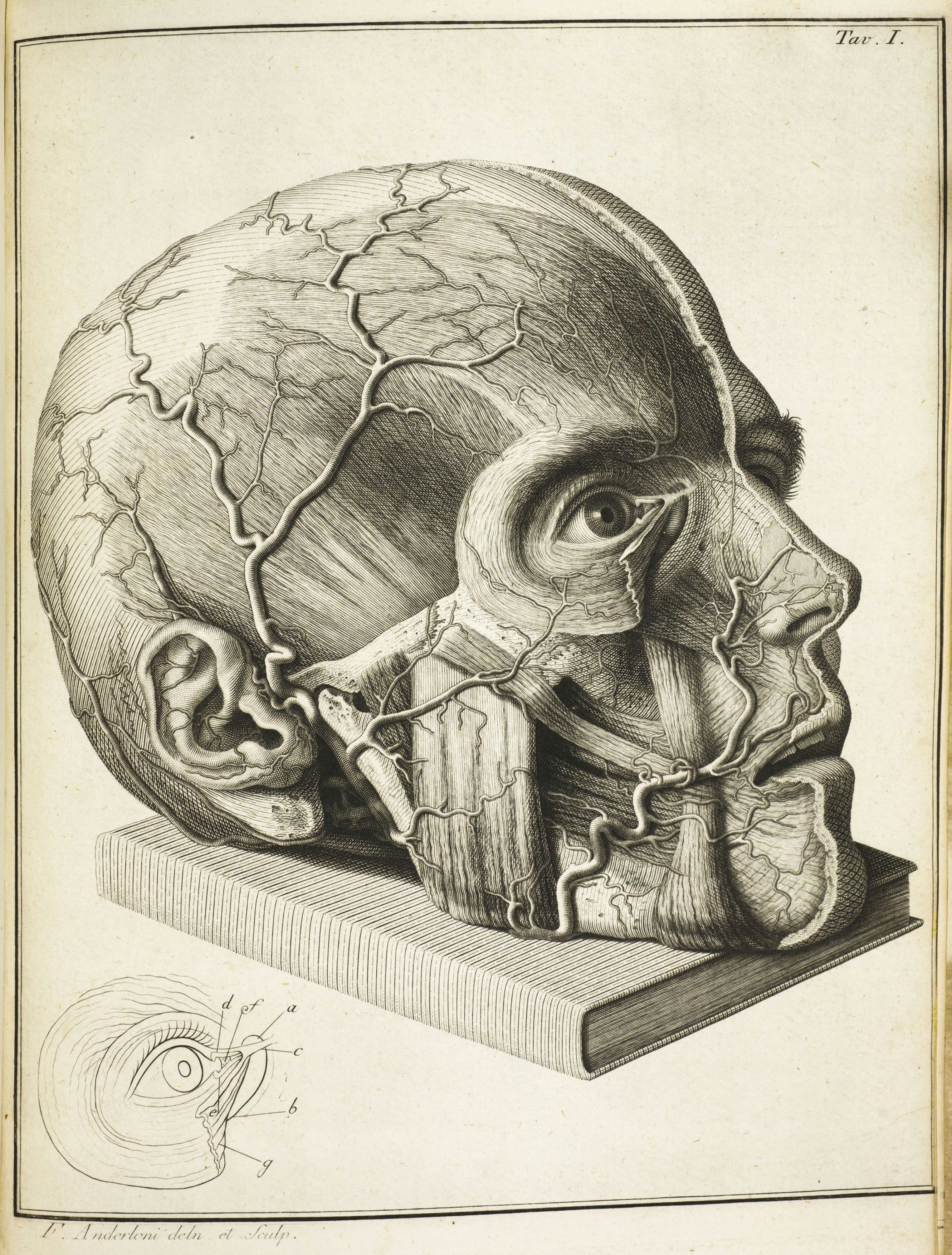 Skull Drawing Brain 16th Century Drawings Of Disease are as Fascinating as they are
