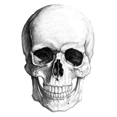 Skull without Jaw Drawing Od 4 De Leerlingen Houden Vol Om Een Doel Te Bereiken 18 De