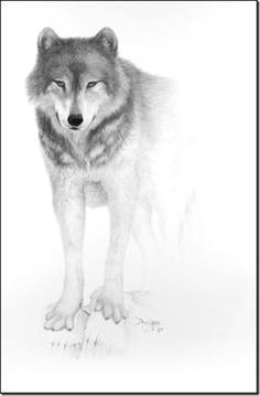 Wolf Drawing Front 109 Best Wolf Images Wolf Drawings Art Drawings Draw Animals