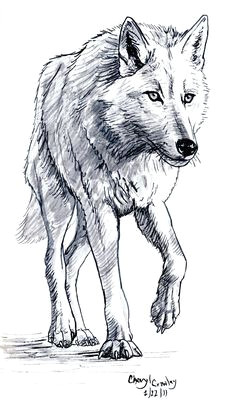 Wolf Drawing Full Body 180 Best Wolf Drawings Images Drawing Techniques Drawing