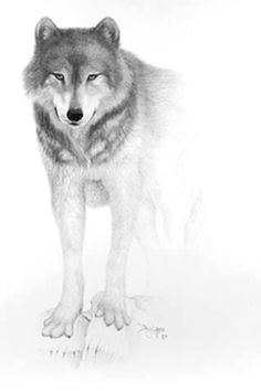 Wolf Drawing Sitting Down 180 Best Wolf Drawings Images Drawing Techniques Drawing