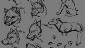 3 Wolf Drawing 109 Best Wolf Images Wolf Drawings Art Drawings Draw Animals