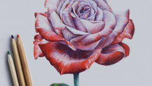 3d Drawing Of A Rose Drawing Rose More Art Lapis De Cor Aquarela Arte 3d