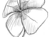 4 Leaf Clover Drawing Easy Gallery for Cool Four Leaf Clover Drawing Painting Drawing