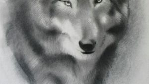 4 Ways to Draw A Wolf A Step by Step Guide Of How to Draw A Wolf
