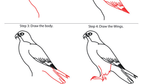 Animals that You Can Draw How to Draw Falcon Google Search Easy Drawings Bird