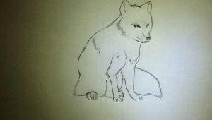 Arctic Fox Drawing Easy Arctic Fox Drawing Dumora A C 2020 Jun 13 2012